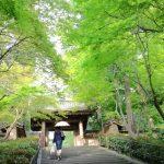 鎌倉 お寺